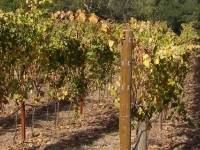 Sonoma State University Announces Hybrid Executive MBA in Wine Business