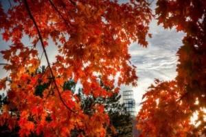 Autumn on Campus at Binghamton University, State University of New York